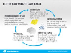 Leptin and ghrelin are two hormones that have a huge impact on your hunger levels and weight-loss success. Learn more about these hunger hormones and take control of your appetite!
