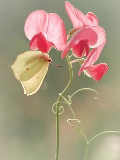 No one can appreciate a flower as a butterfly does.