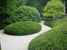 boxwood and gravel garden