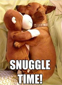 my little dachshund does this with stuffed animals or pillows Animals And Pets, Baby Animals, Funny Animals, Cute Animals, Dachshund Funny, Dachshund Love, Daschund, Dachshund Facts, Dapple Dachshund