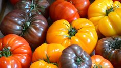 Think beyond beefsteak and roma when planning your garden - here is a color-by-color guide to heirloom tomatoes.
