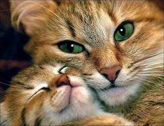 Amor de mamás
