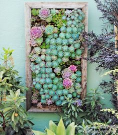 Succulents live wall - another great design for the living wall I'm planning for my screened porch.
