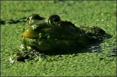 Mouth Full of Duck Weed by mydigitalmind on DeviantArt