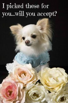 Juliet picked these flowers just for you...will you accept? Find hundreds of unique Chihuahua names for your own cutie here... http://www.dog-names-and-more.com/Chihuahua-Names.html