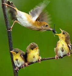Mamãe passarinho alimentando seus filhotes!!😘😀💖