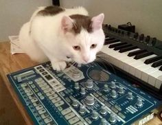 I'm the musician now. And please, let me concentrate. Funny Animals, Cute Animals, Cats, Pretty Animals, Gatos, Kitty Cats, Cutest Animals, Cute Funny Animals, Hilarious Animals