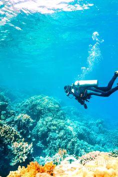 Ihr wolltet immer schon einmal Tauchen gehen? Oder seid Taucher? Dann empfehlen wir ihnen Ägypten, denn die Unterwasserwelt des Roten Meeres hat ordentlich was zu bieten. #Urlaub #Tipps #Urlaub #Reisen Sci Fi, Bucket, Vacation Travel, Red Sea, Scubas, Snorkeling, Tours, Science Fiction, Buckets