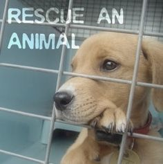 Rescue an animal. <3