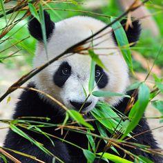 Afbeeldingsresultaat voor bamboe