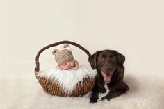 Newborn with dog photography.... NEED THIS!!