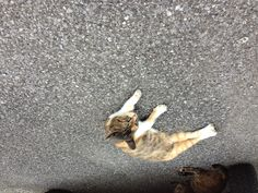 養老渓谷のネコ