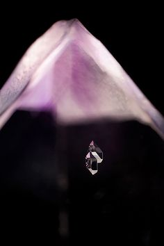 Negative Crystals in Amethyst - The Art of Photomicrography: Gemstone Inclusions by Danny Sanchez
