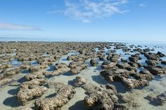 The earliest evidence for life on Earth arises among the oldest rocks still preserved on the planet, dating back some 4 billion years.