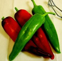 Warm & Sweet Pepper Plant Collection  marconi, fooled you, yummies and ? 16 plants for 20$