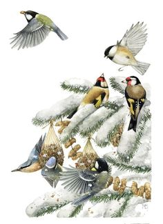 """Great Tit, Willow Tit, Goldfinch, Blue Tit, Nuthatch"" by Marjolein Bastin"