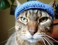 free crochet pattern for a cat beanie. I think I need to make a couple of these for my guys.