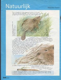 50 different illustrations Marjolein bastin Natuurlijk Nature (12/08/2011)
