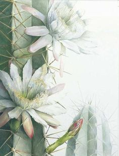 ru / Фото - Botanical Paintings by Elaine Searle - Art And Illustration, Illustration Cactus, Illustration Botanique, Floral Illustrations, Vintage Botanical Prints, Botanical Drawings, Botanical Art, Art Floral, Watercolor Flowers