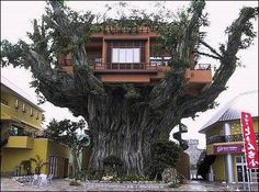 Not really so dreamy but certainly looks fantastical...kind of like the thumping tree in Harry Potter but with a house.