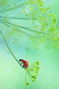 Ladybug by Magda Wasiczek