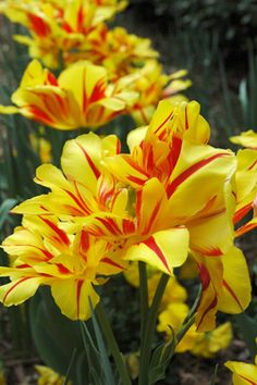 COLORBLENDS | Sample Plantings