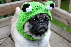 Etsy seller Sweethoots makes adorable little hats for pugs and sells them in her Etsy store. Her pug Pickles is her model. (h/t to Craftzine and All Creatures for discovering Pickles) King Charles Spaniel, Cavalier King Charles, Pugs, Pug Love, Hat Making, Big Eyes, Your Dog, Cute Animals, Baby Animals
