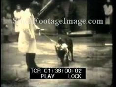 Two headed dogs Demikhov Shocking experiment Footage