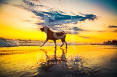 Cão na beira da praia, no Rio de Janeiro, Brasil. #RJ #PET #RIO #DOG  #SUNSET