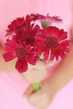 Colors ~ Pink and Red