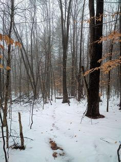 """Winter Trail Running Is Here - 2016 - http://www.beardedgoattrailrunning.com/uncategorized/winter-trail-running-2016/ -  Winter trail running is here! Well, it's """"here"""" for me! We got a good amount last week and there's still a bit on the trails in the hills. So – what are your winter trail running plans? For those of you in warmer climates, it may not mean much of a change…or..."""