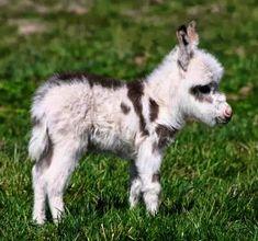 Cool - Cute Animals Videos Facebook :)