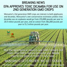 EPA approves toxic DICAMBA for use on 2nd generation GMO crops Monsanto's 2nd generation GMO crops are tolerant to both glyphosate & dicambo ......... Monsanto gets richer. we get sicker.