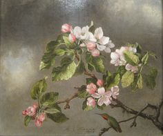 Hummingbird and Apple Blossoms, Martin Johnson Heade, 1875.