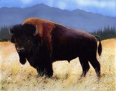Great Plains Buffalo   share