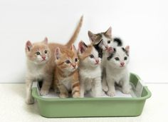 Why Multiple Cats Need Multiple Litter Boxes   petMD