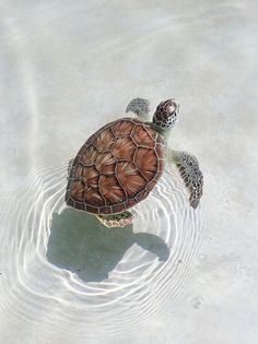 🌼 - not my pics! Cute Wild Animals, Baby Animals Super Cute, Baby Animals Pictures, Cute Little Animals, Cute Animal Pictures, Cute Funny Animals, Animals Beautiful, Sea Turtle Pictures, Dog Pictures