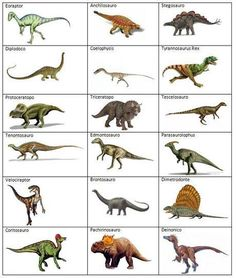 Knowing the real names of dinosaurs. How many can you say without making a mistake. Dinosaurs Names And Pictures, Names Of Dinosaurs, Dinosaurs Preschool, Dinosaur Pictures, Dinosaur Activities, Dinosaur Crafts, Dinosaur Fossils, Dinosaur Party, Dinosaur Birthday