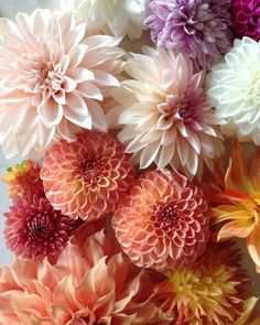 New year, old picture. A few of my favorite dahlia varieties from 2015 Anemone Flower, Dalia Flower, Flower Phone Wallpaper, Hardy Perennials, Flower Farm, Floral Bouquets, Flower Power, Paper Flowers, Planting Flowers