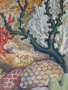 Antique German lithograph of Corals marine by PrimrosePrints, £12.00