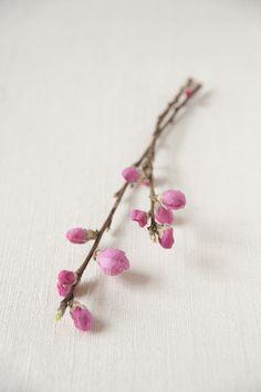 ひなまつりには欠かせないモモは、つぼみがふっくらしたものを選ぶと、きれいに花が咲きます。/暮らしの花飾り(「はんど&はあと」2012年3月号)