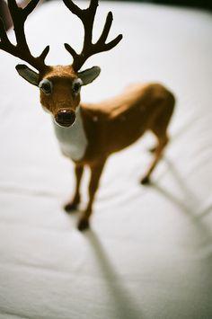無標題 Moose Art, Animals, Animales, Animaux, Animal, Animais
