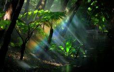 Forest rainbow