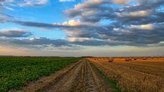 La Banca delle terre agricole è un progetto per mappare e rendere disponibili a tutti, attraverso un database nazionale, gli appezzamenti di terre agricole.