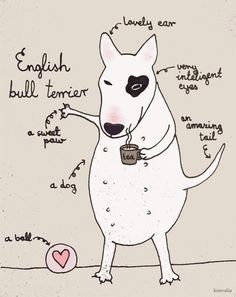 Alex Keating posted Anatomy of a bull terrier to his -all dogs- postboard via the Juxtapost bookmarklet. Bull Terrier Funny, Fox Terrier, Bully Terrier, Love Pet, I Love Dogs, Miniature Bull Terrier, Dog Suit, English Bull Terriers, Pet Life