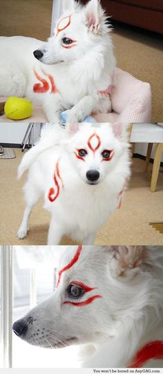 The best animal cosplay I've seen