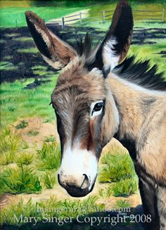 Mary Singer Portrait Artist, Wildlife, Equine and Animal Art, Award Winning Minnesota Painter Donkey Drawing, Acrylic Art, 20 Years, Minnesota, Wildlife, Mary, Portraits, Singer, Watercolor