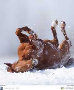 #horse #pic #snow