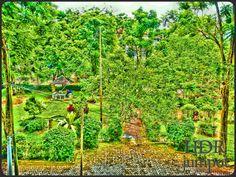 Side yard UPT. Perpustakaan Unmul, Samarinda, Indonesia. #sideyard #library #hdrphotograpy #jumpot #anggrekungu