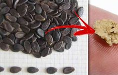 cum eliminam pietrele la rinichi in mod natural Natural, Health, Food, Health Care, Essen, Meals, Nature, Yemek, Eten